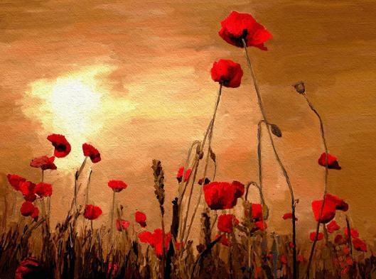sunset-poppies-james-shepherd