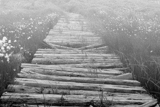 way_to_nothingness_by_shadulka-d33l28o