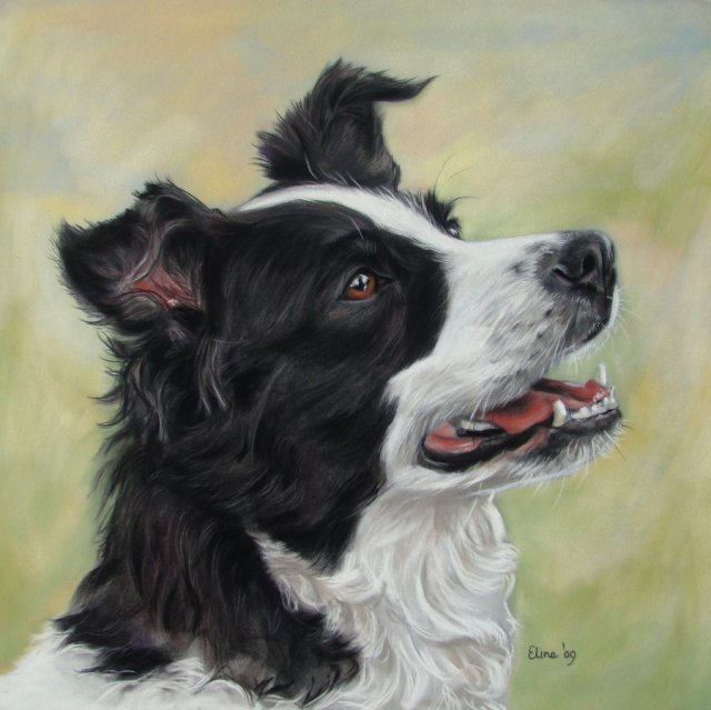 border_collie_by_eline_portraits-d35xuum