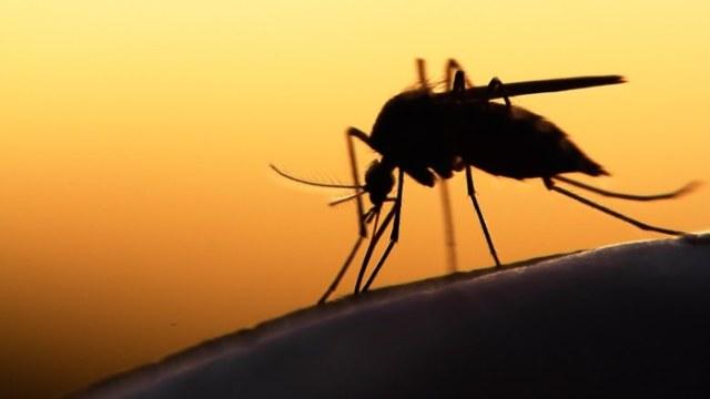 mosquito-malaria-1