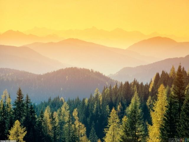 golden_forest_switzerland_1400x1050